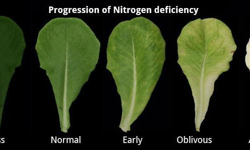 stikstof tekort biogenetic nitrogen deficiency