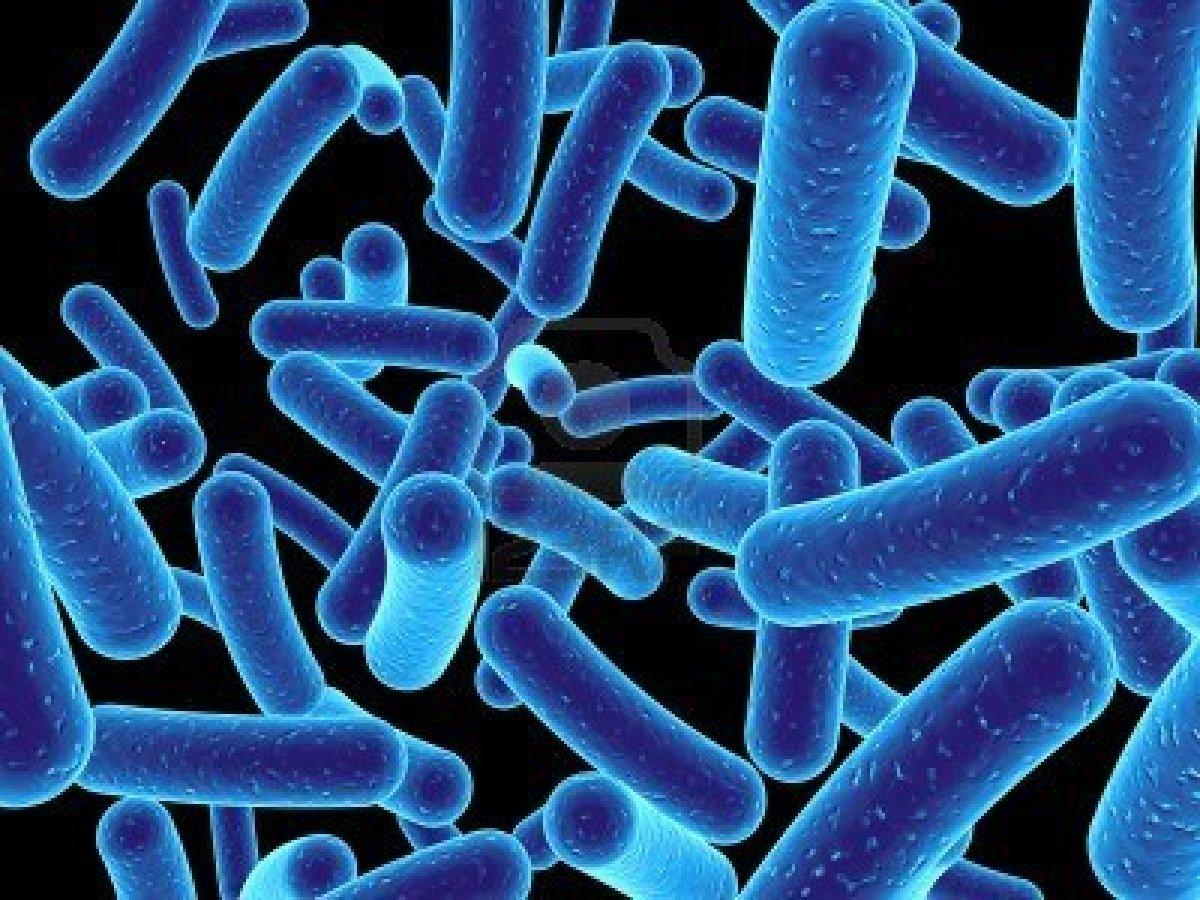 Citizen Microbiologist