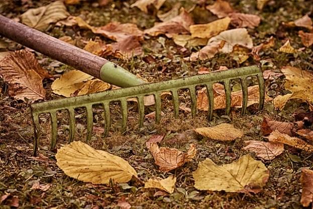 Garten Tipps für den Herbst