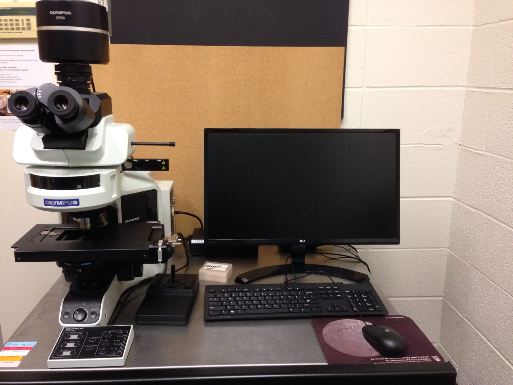 Olympus Bx53 Light Fluorescence Microscope