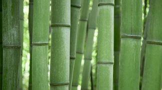 bambu alami