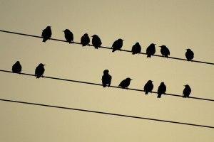 birds_on_far_banks_power_line