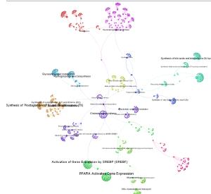 Gephi: detail du graphe en n'affichant que les noms des noeuds dont le degré est supérieur au seuil