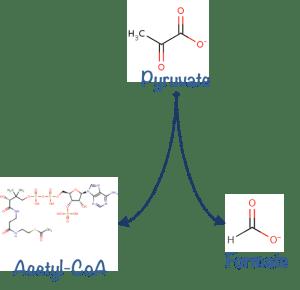 Une hyperarête orientée qui relie le pyruvate à l'acétyl-CoA et au Formate. Image par l'auteur.