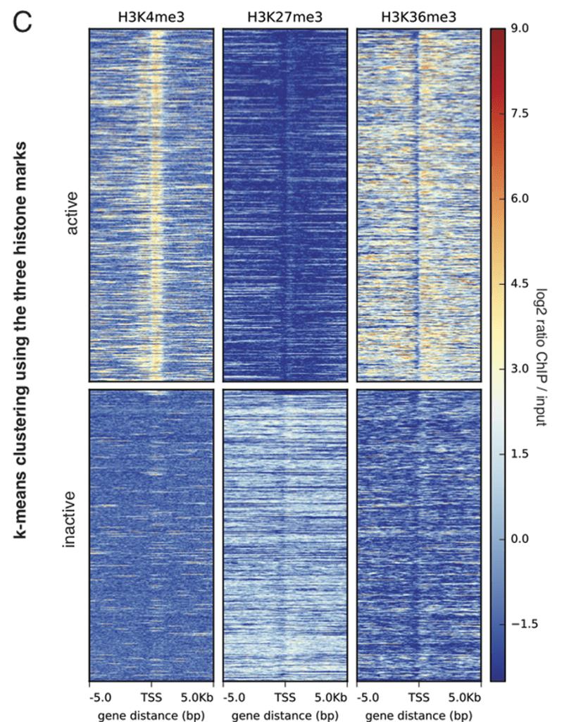 Exemple de pile de profil epigénétiques centrés sur les sites d'initiations de la transcription.