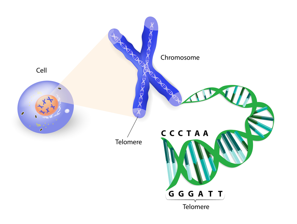 BioViva Makes Controversial Announcement of First Gene Therapy Successful Against Human Aging