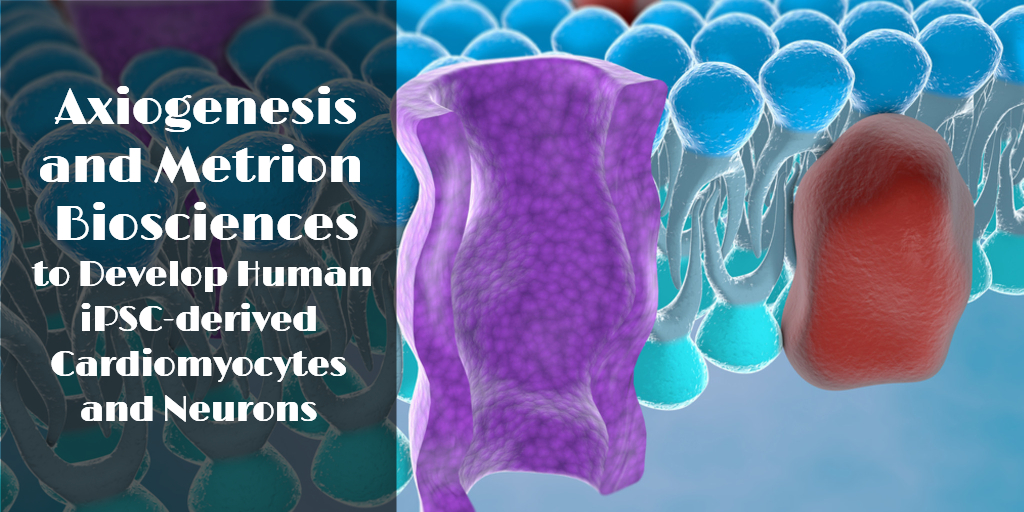 Axiogenesis and Metrion Biosciences to Develop Human iPSC-derived Cardiomyocytes and Neurons