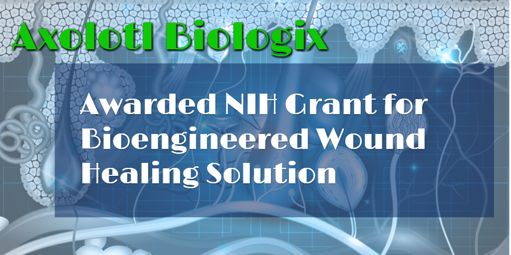 Technology Licensed by Axolotl Biologix Awarded NIH Grant for R&D of Bioengineered Wound-healing Solution for Diabetes Patients