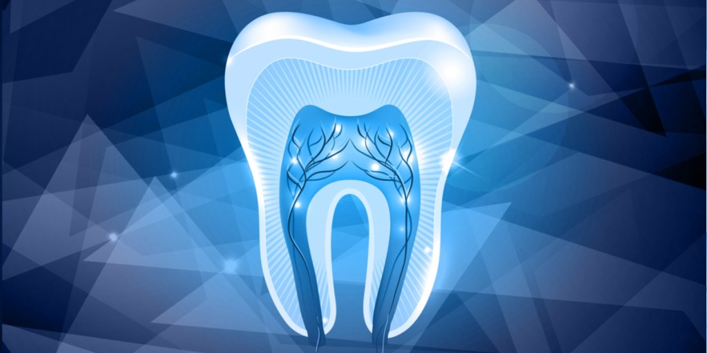 What are Tooth Stem Cells? | Dental Stem Cells