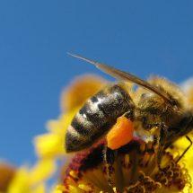Bio und die Biene – sind Zwillinge