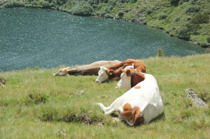 Chillen am Bergsee auf der Alm © Bio Austria