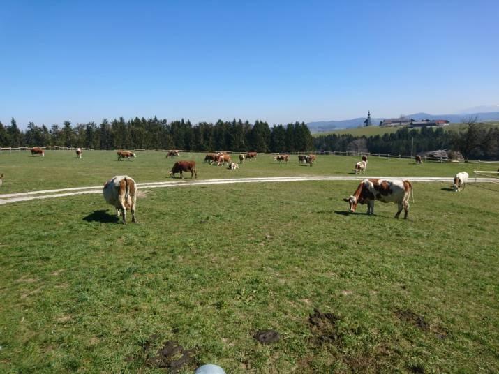 Weide in Sommerholz © Greischberger