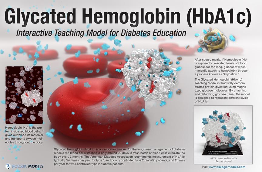 glycated hemoglobin hba1c  u2013 biologic models