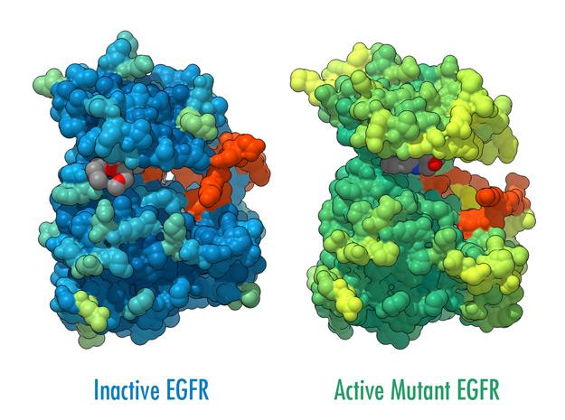 EGFR Surface Visualization