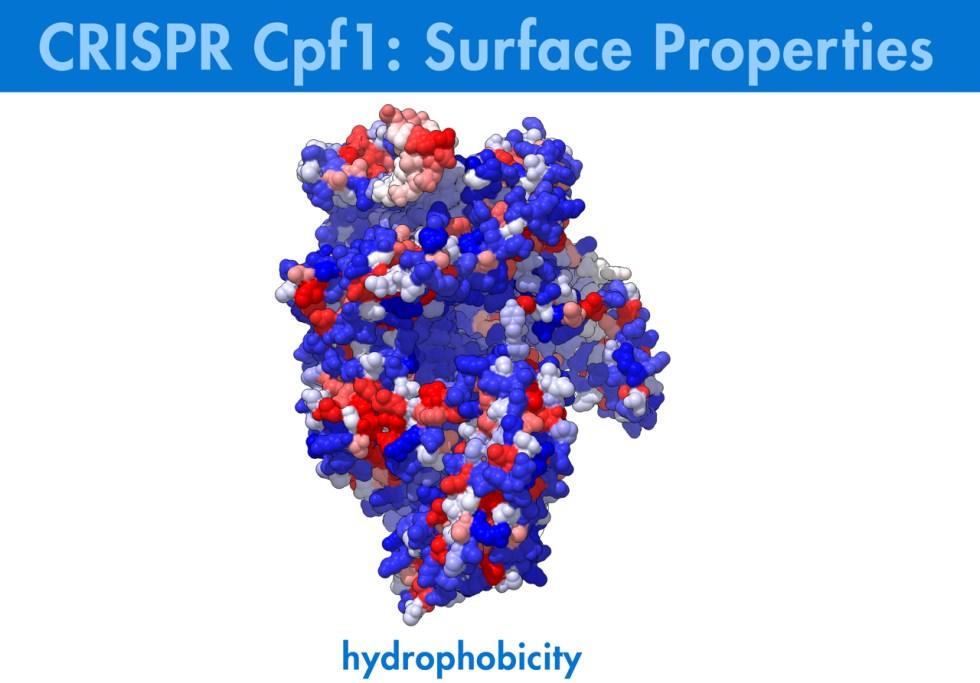 Biologic Animation, Biologic Models, CRISPR, Cpf1