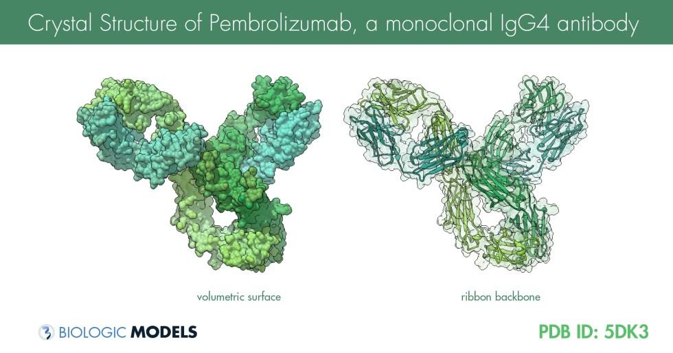 Pembrolizumab KEYTRUDA, IgG4, antibody, biologic models, oncology
