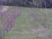 Peschi 15-03-2014