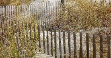 milieux naturels dunaires