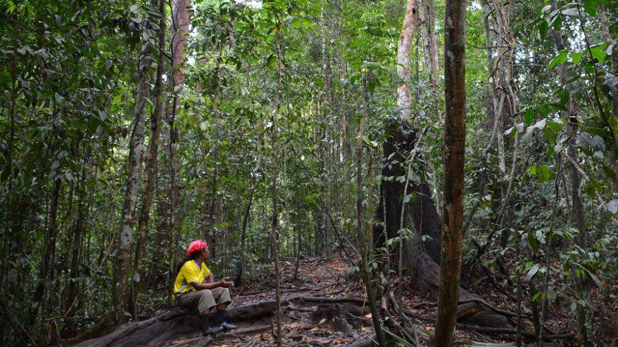 Otkrivene nove vrste životinja u prašumama Malezije