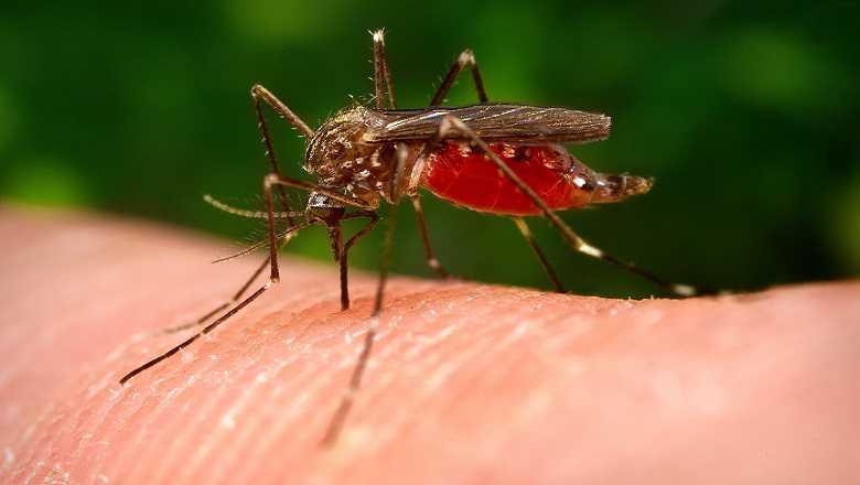 Мирис који привлачи комарце