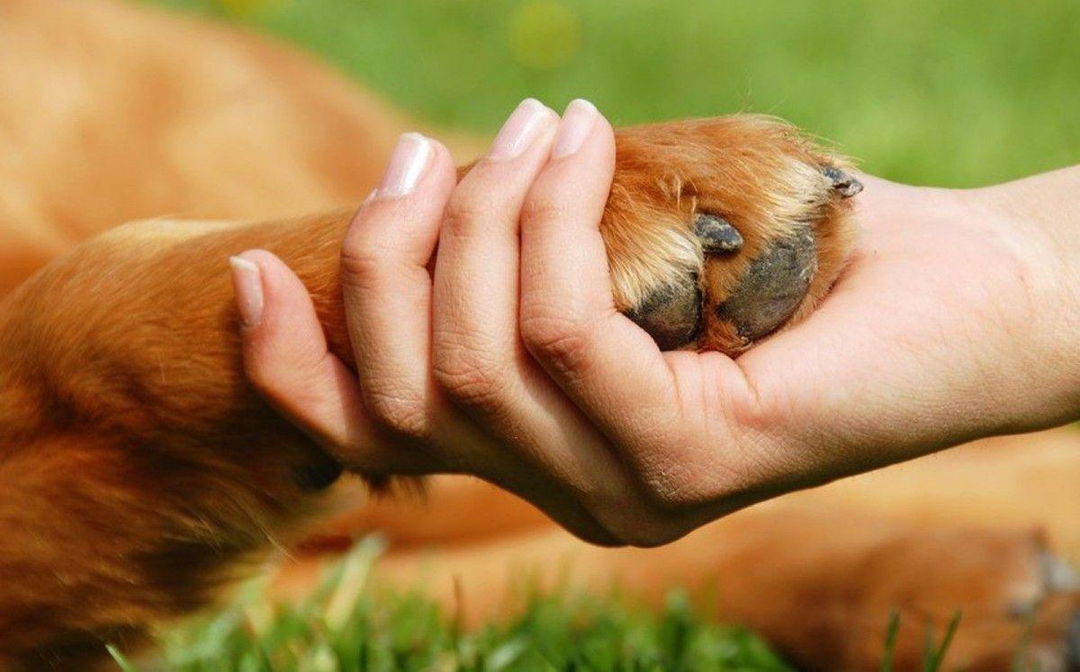 Људска активност драстично мења понашање животиња