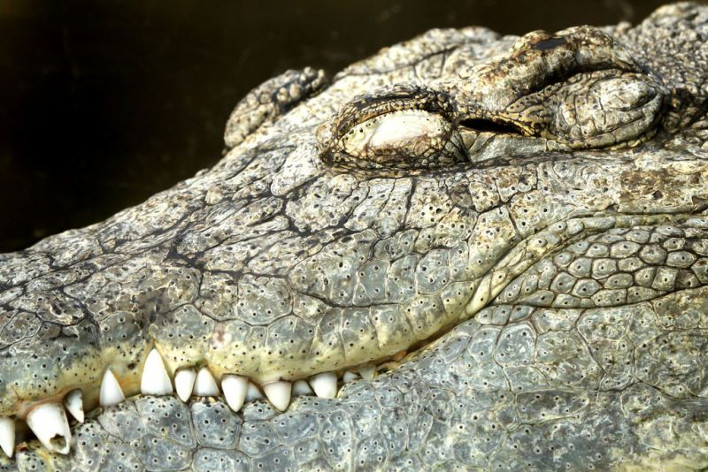 Крокодили: хладнокрвне убице