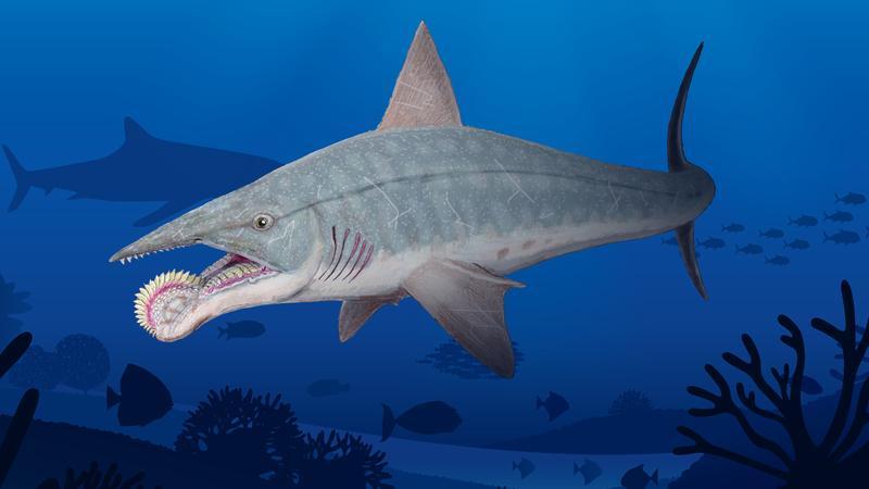 Пронађен фосил праисторијске рибе са тестерастим зубима