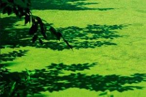 ficologia: Proliferação de algas