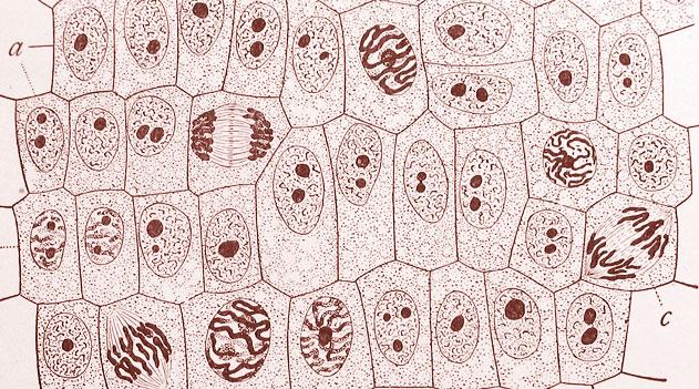 Citologia: Células