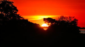 O futuro da Amazônia