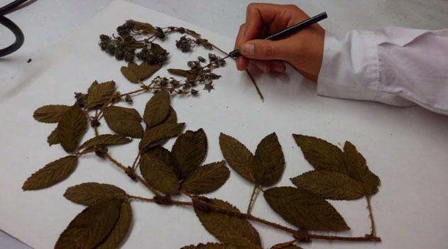O Herbário