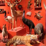 Férias nos museus de ciência