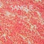 Fantásticas imagens de microscópio
