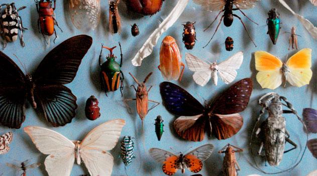 Animais - Metazoa. Coleção de insetos