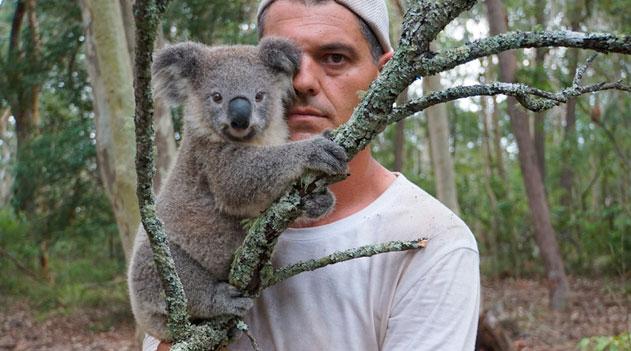 Perdido na Austrália - Coala