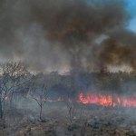 O alarmante desmatamento do Cerrado