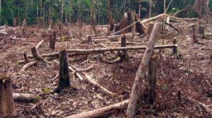 Amazônia à mercê do desmatamento
