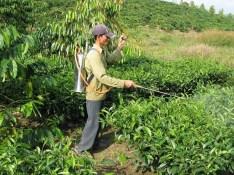 aplicando_pesticidas