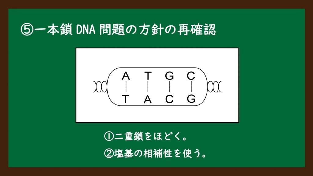 一本鎖DNAの塩基の割合の計算問題の解説⑧