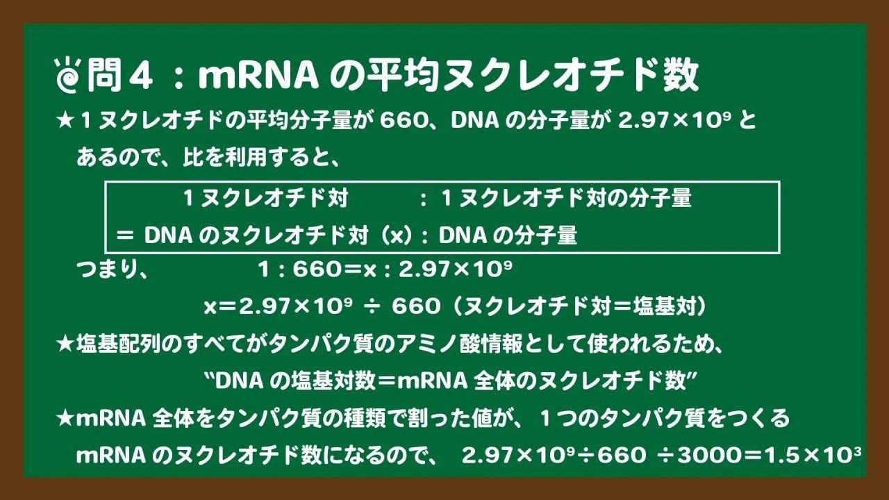 スライド16:mRNAの平均ヌクレオチド数の求め方