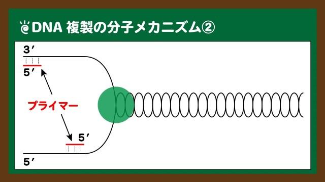 図.プライマーの結合