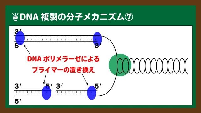 図.RNAプライマーはDNAに置き換えられる