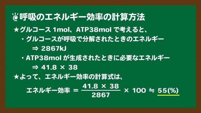 スライド8:呼吸のエネルギー効率の計算方法