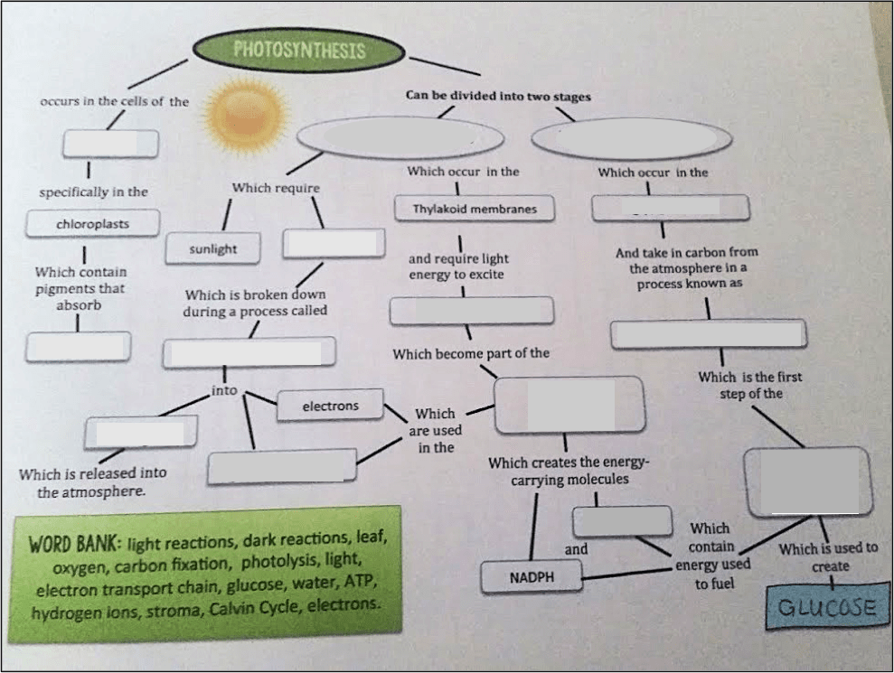 photosynthesis-graphic-organizer