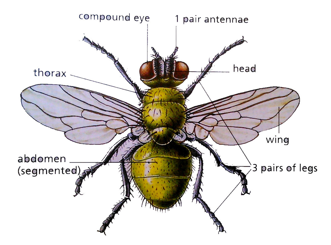 1 2 Classification And Diversity Of Living Organisms