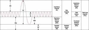 Vital Capacity - Definition and Formula   Biology Dictionary