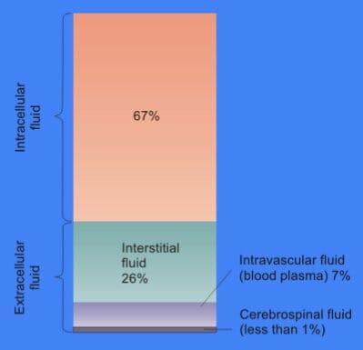 Contenido de fluido celular