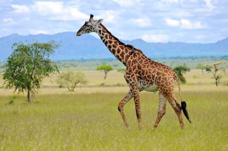 biggest land animals on earth