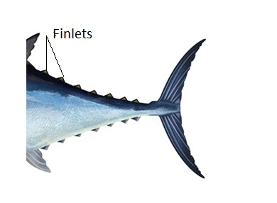 image of finlets