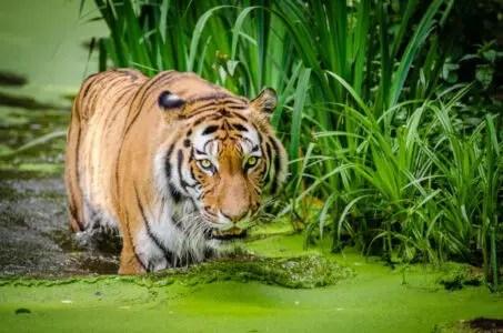 image of Wildlife